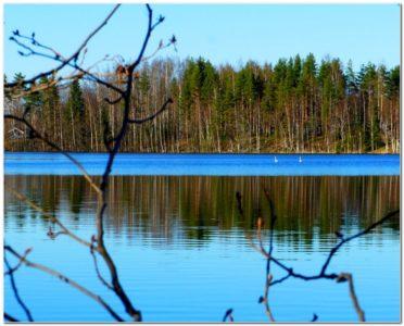 природа_языковой лагерь миккели_финляндия
